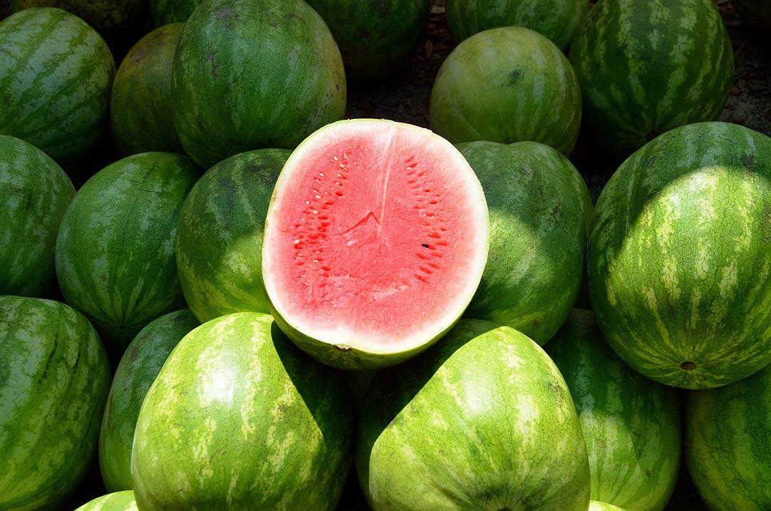Watermelon SLA